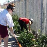 Gardening in Blikkiesdorp.