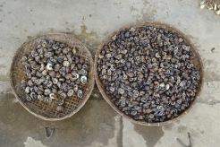 snailsanyone